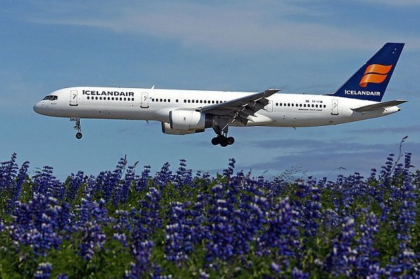 Boeing airplane from Icelandair over a field of lupine flowers.
