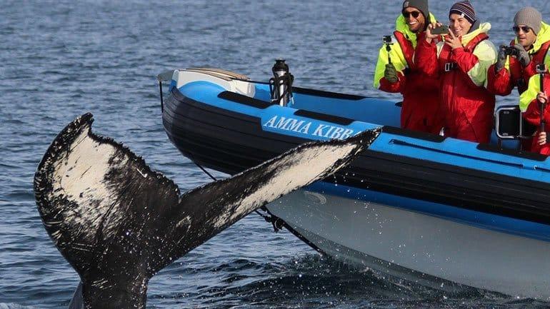 Observation des baleines depuis un bateau semi-rigide de Husavik Islande
