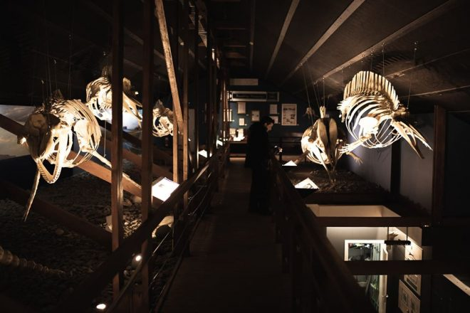 Inside Husavik whale museum
