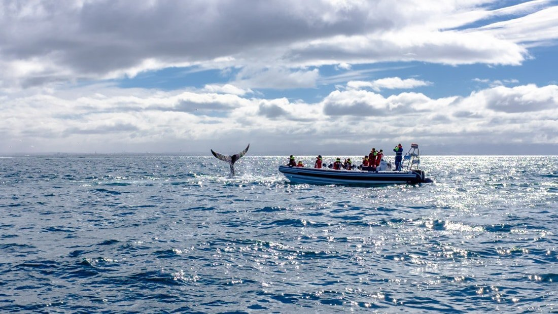 RIB Boat Whale Watching Tour from Reykjavík