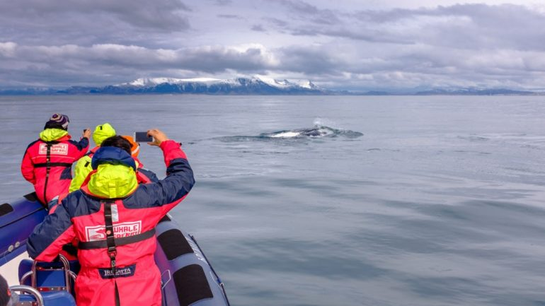 Photographing the animals on a RIB Boat Whale Watching Tour from Reykjavík