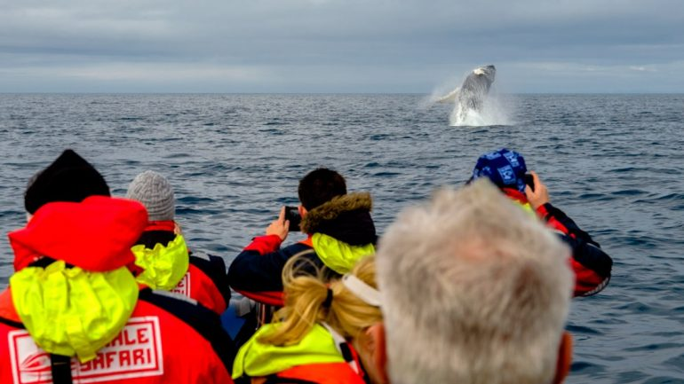 Watching gentle giants on a RIB Boat Whale Watching Tour from Reykjavík