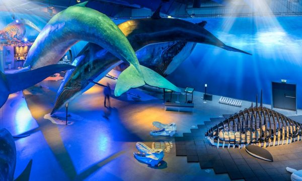 Visit the Whales of Iceland Exhibition in Reykjavik