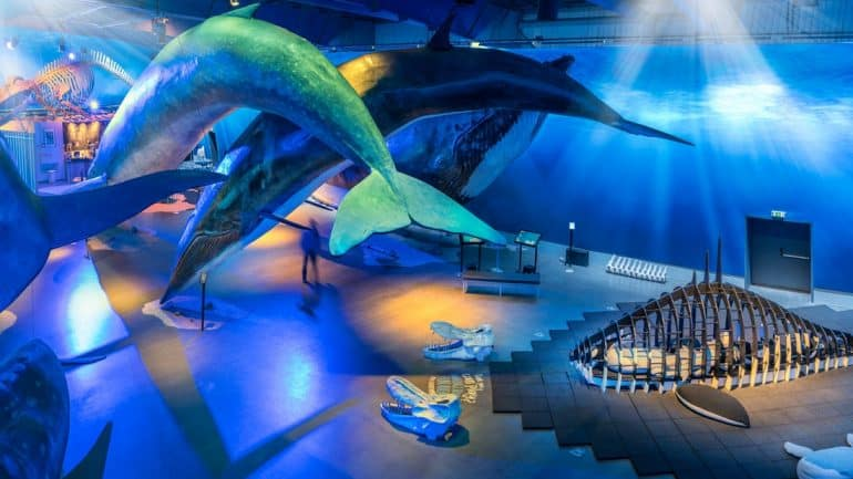 An overhead shot of the Whales of Iceland Exhibition in Reykjavik