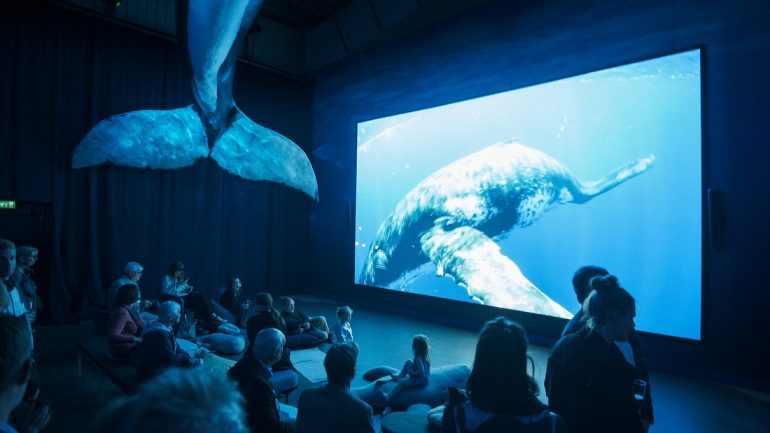 Guests watch a movie at the Whales of Iceland Exhibition in Reykjavik