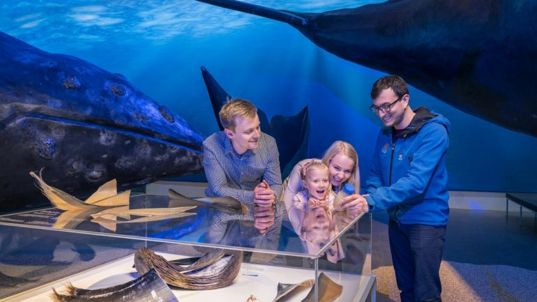 The Whales of Iceland Exhibition in Reykjavik is great for kids and adults.