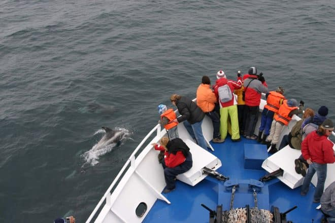 Whale watchers spot harbour porpoises in the water.