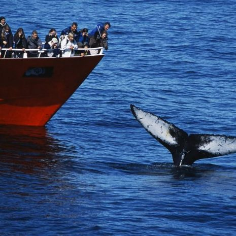 Classic Whale Watching Tour From Reykjavik's Old Harbour