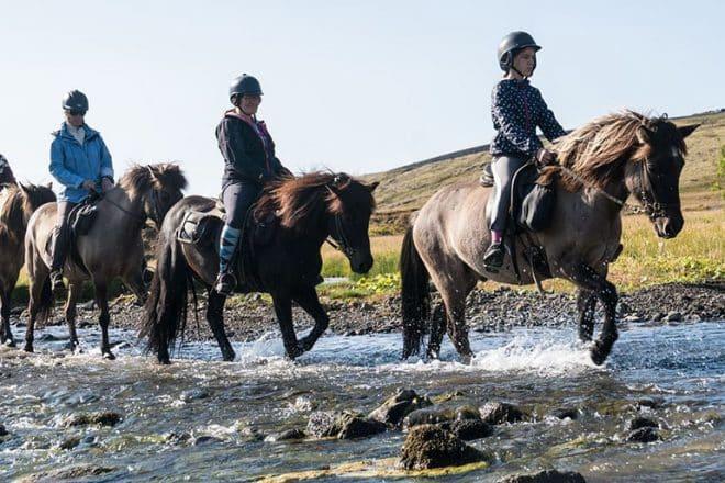Equitation en Islande