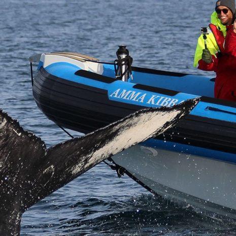 Whale & Puffin RIB Boat Tour in Husavik
