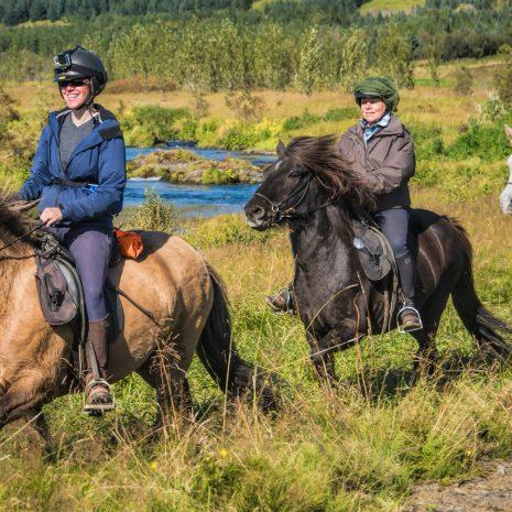 Excursion à cheval d'une heure et demie dans l'ouest de l'Islande avec prise en charge depuis Reykjavik