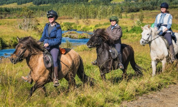 1,5 Hour Horse Riding Tour in West Iceland with Pick-Up from Reykjavik
